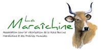 Vache Maraichine