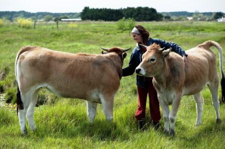 Ludivine cosson avec 2 vaches maraichines