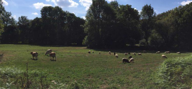 Pastoralisme avec des races locales sur les rives de l'Yon